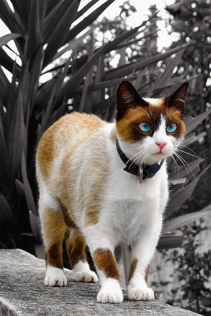 Top 5 Calm Cat Breeds to go along with Kids