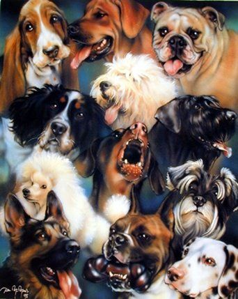 Add a funky and give a new look to tour room décor with this collage dogs breeds animal art print poster. The beautiful colors of this poster will bring the amazing beauty to any room in your home. This poster is perfect for every dog lover. We ensure the high degree of color accuracy and paper quality.