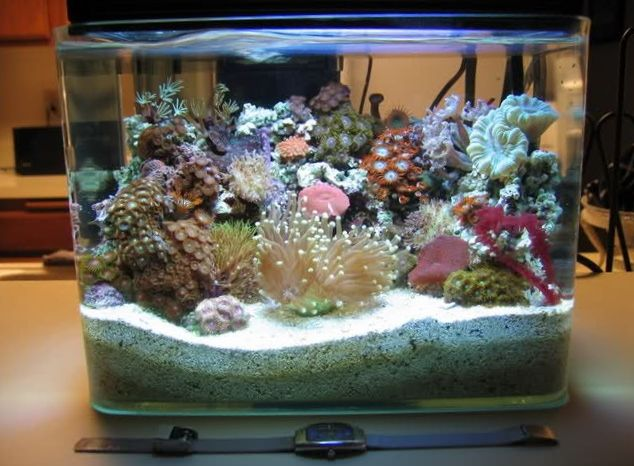 59 best images about aquariums on pinterest sharks for Micro fish tank