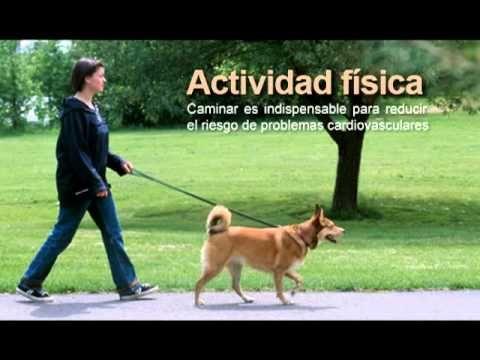 actividad física y sus beneficios - YouTube