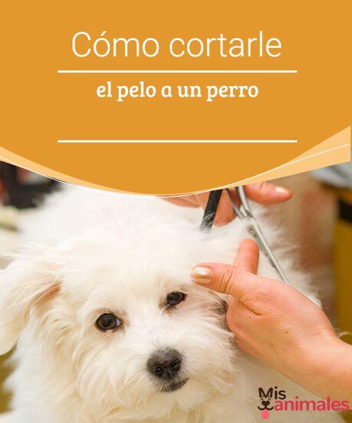 Cómo cortarle el pelo a un perro - Mis animales  Consejos para cortarle el pelo a un perro. Para llevar a cabo el corte, tienes que elegir un lugar donde tu perro se sienta cómodo y relajado.