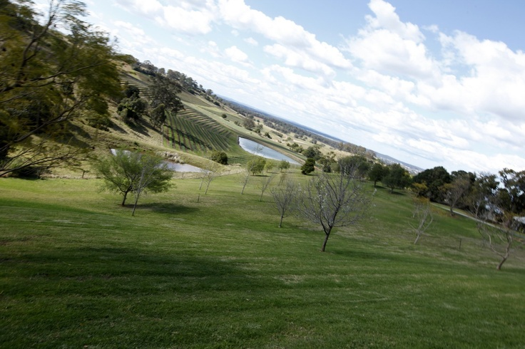 Leaning sky - Mt view. Mount View, Hunter Valley, NSW