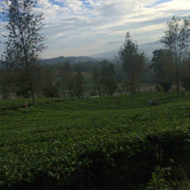 Garut, West Java