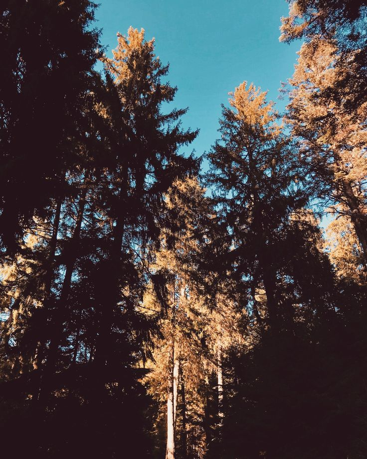 [#HD Wallpaper] #IPhone8 #IPhoneX Samsung Galaxy S8, #Larch #Apple Boy Genius Report, Temperate broadleaf and mixed forest, Wallpaper  - Photo by Teodor Drobota @teodordrobota (unsplash)  - Follow #extremegentleman for more pics like this!