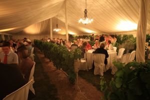 A gorgeous setting nestled among the vines at Craggy Range Winery in Hawkes Bay. Silk liners catch the light perfectly for a warm & romantic setting - www.mardigrasevents.co.nz