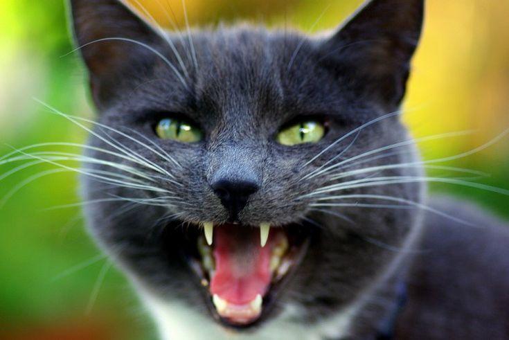 Catnip Wars – Day 17 The Yowling Festival check this amazing photo from Katzenworld