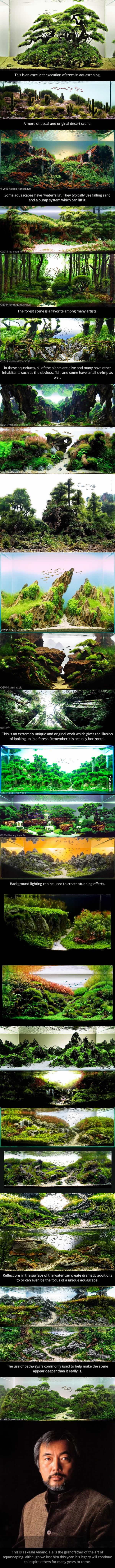 This is just amazing . . . . . . . . . . . . . . . . . . . . . . . . . . . These are aquariums. This is the art of a aquascaping.