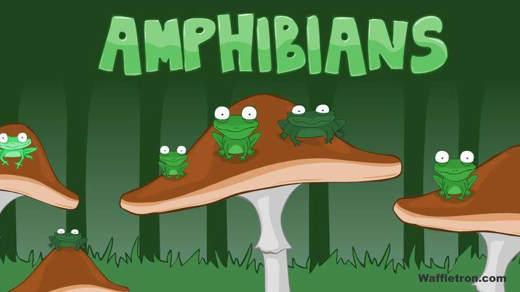 Toad, Frog, Pollywog - Amphibians Kids Song