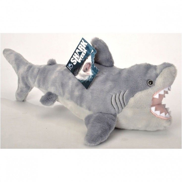 Po Et Nejlep Ch Obr Zk Na T Ma Shark Na Pinterestu