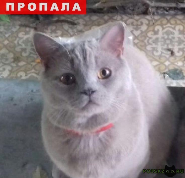 Пропал кот г.Курган http://poiskzoo.ru/board/read31067.html  POISKZOO.RU/31067 Помогите найти кота Хочу обратиться за помощью. .. августа пропал кот, на даче. Все это время велись поиски, но так и не нашли. .. августа его видела девушка на дамбе в Мало Чаусова, а .. сентября, его соседи поймали, но он сбежал от них. Кот Гриша совсем исхудал и требует лечения. Скоро зима и кот погибнет, т. к. он домашний и никогда не жил на улице, да и с дач все уедут и ему не прокормиться. Моя мама…