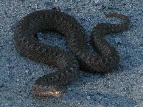 Kaiken näköiset ja kokoiset käärmeet, YÖK!!