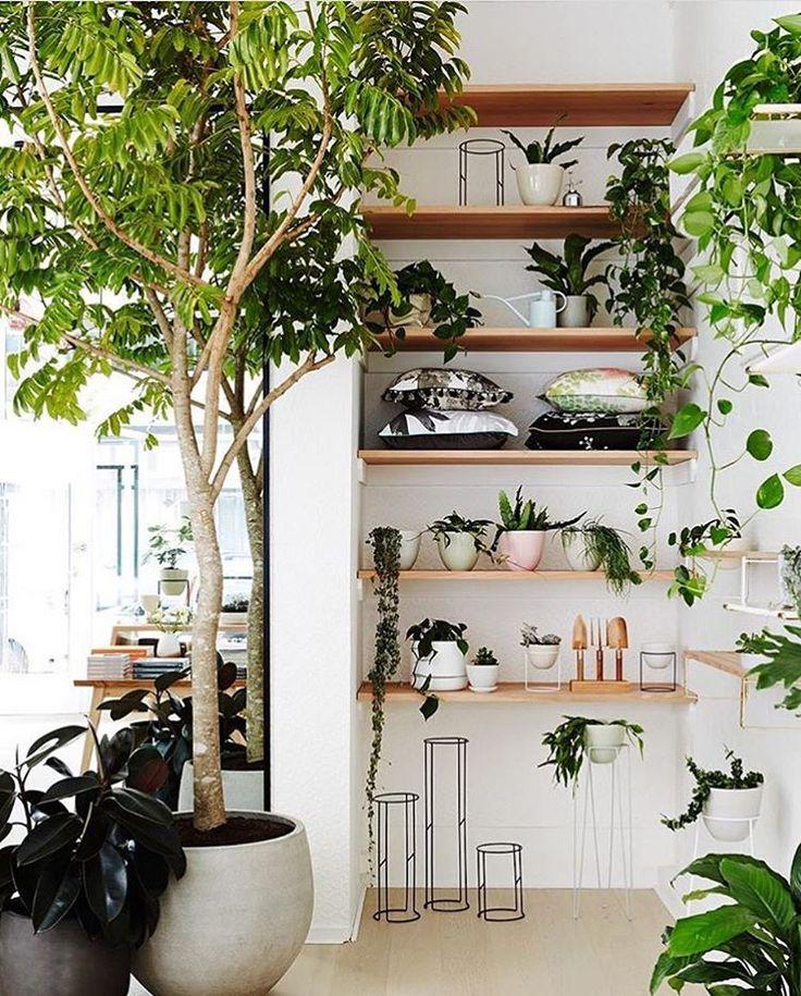 """8,689 mentions J'aime, 48 commentaires - Casa e Jardim (@casaejardim) sur Instagram: """"Que tal organizar o jardim em prateleiras? Misturar suculentas e espécies pendentes torna o…"""""""