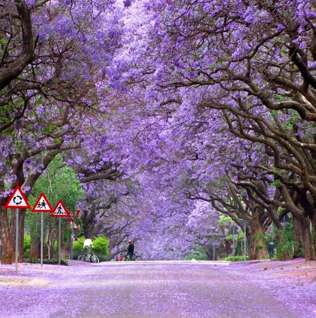Marais Street, Pretoria @África do Sul