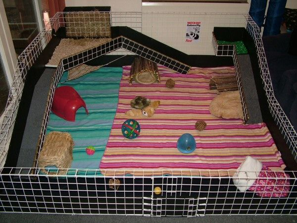 118 best images about guinea pig cage ideas cavy diy on for How to make a guinea pig bed