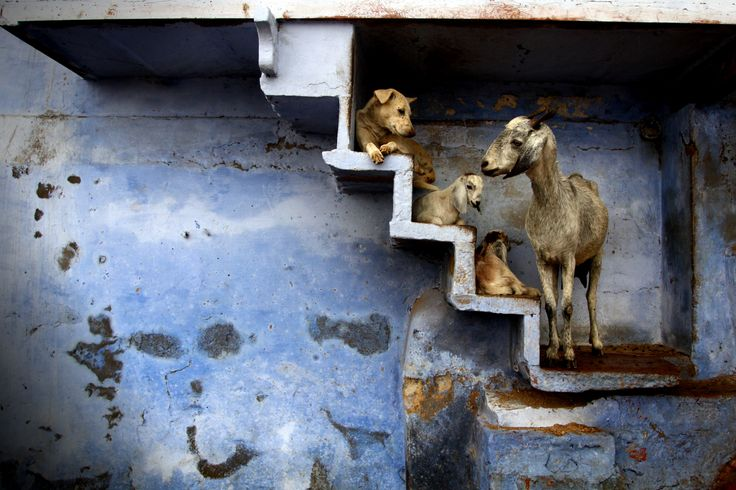 coexistence Photograph by florent Plais -- National Geographic Your Shot