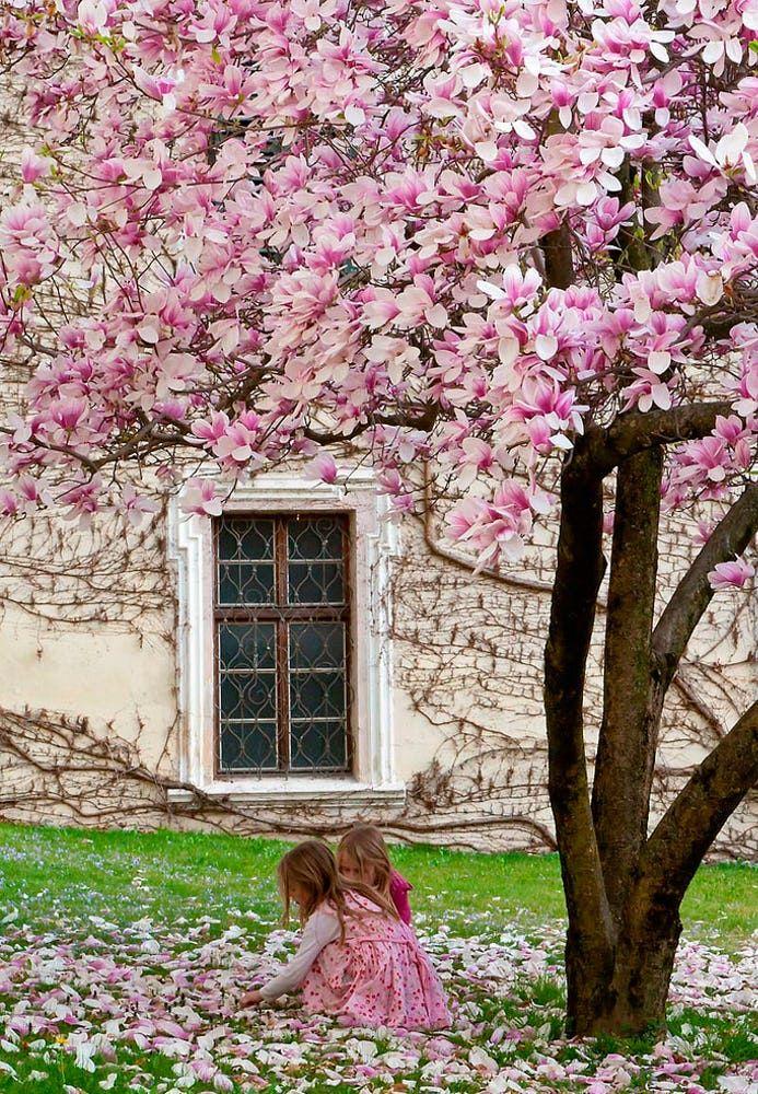 1387 best The Romantic Garden images on Pinterest Gardening - nolte k che lago