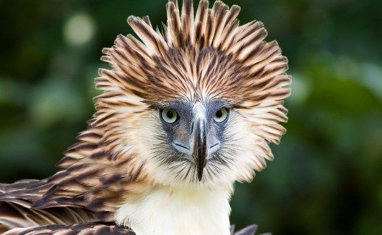 Top Ten Largest Eagles around the World