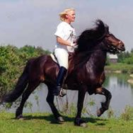 The Icelandic Horse Farm Offers Icelandic & Canadian Horses for Sale
