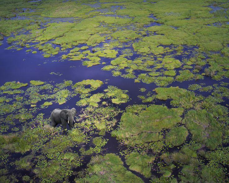 Botswana : la magie du delta de l'Okavango