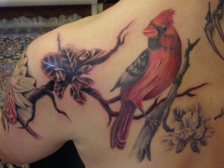 cardinal tattoo designs | red cardinal tattoo things to spend money on