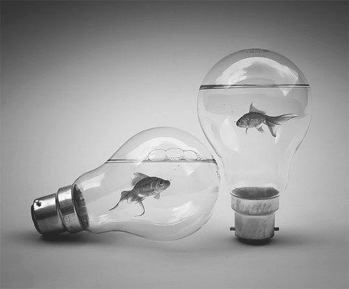 Here fishy, fishy.: Fish Bulbs, Lights Bulbs Aquarium, Inspiration, Front Doors, Fishi Ideas, Cool Ideas, Lightbulbs Fish, Lights Bulbs Fish, Lightbulbs Photography