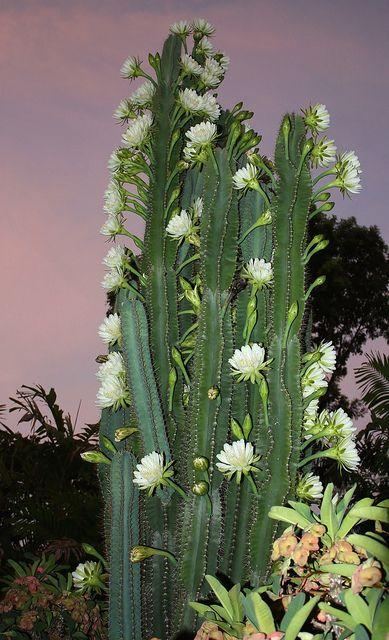 flores de noche