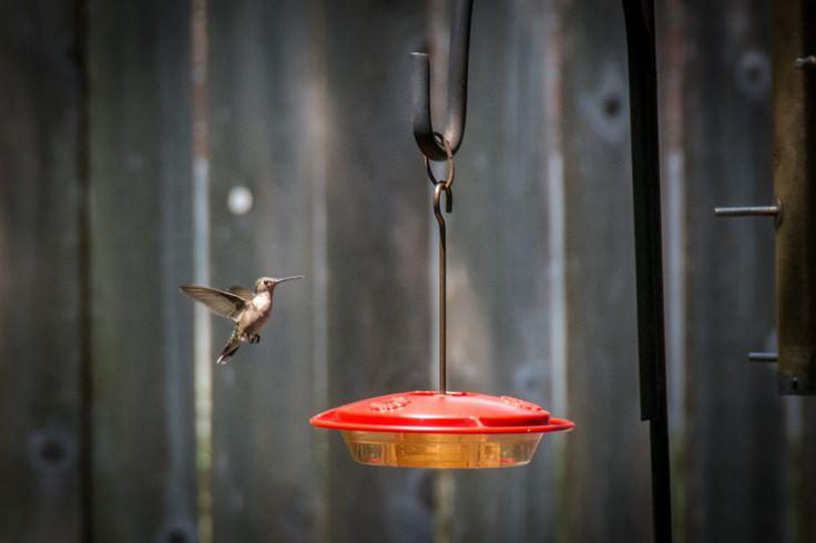 Best Place to Hang a Hummingbird Feeder