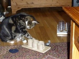 Making Your Own Interactive Cat Feeder check this fantastic photo from Katzenworld  http://katzenworld.co.uk/2016/03/20/making-your-own-interactive-cat-feeder/
