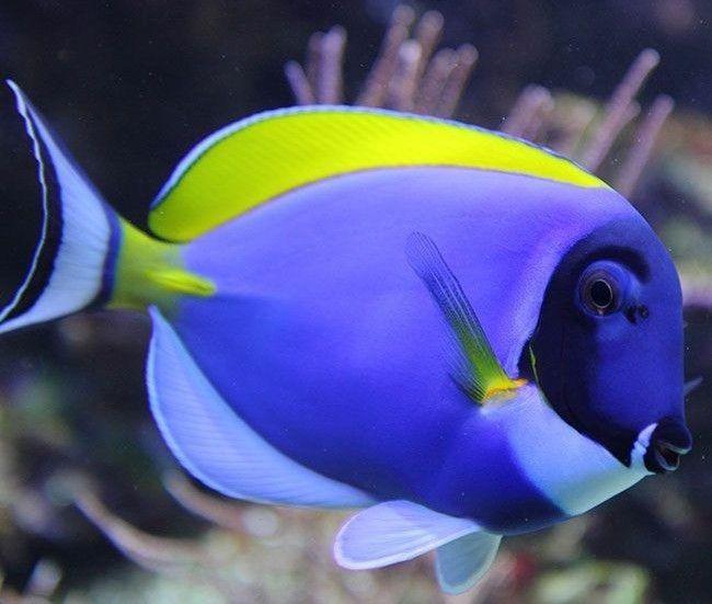 Untitled In 2020 Salt Water Fish Saltwater Fish Tanks Fish