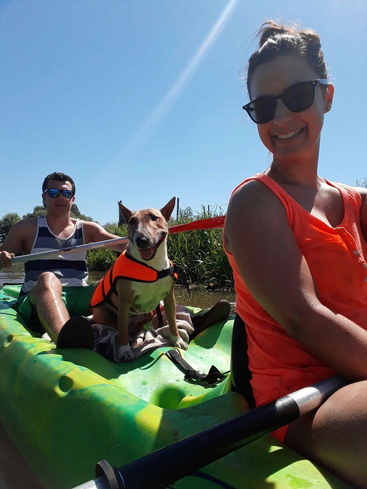 #Canoeing with dog #mini #bull #terrier