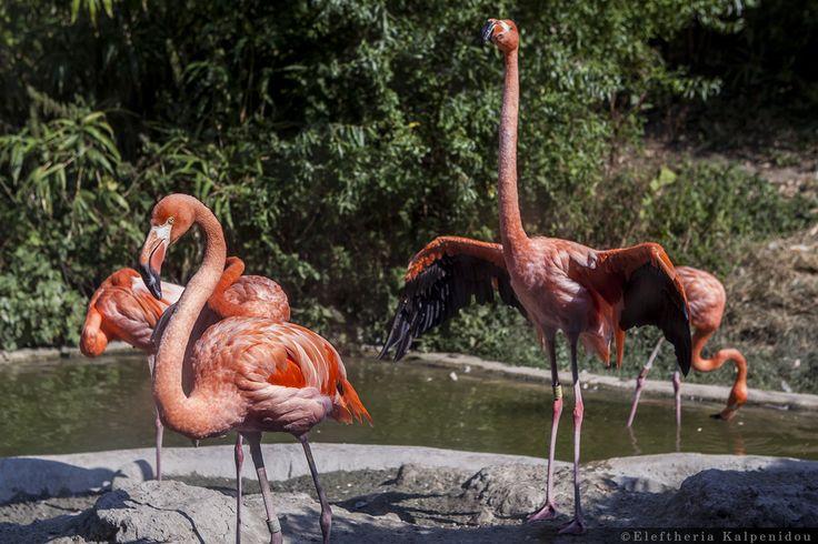 Βirds - Πτηνά (Schönbrunn Zoo Vienna)