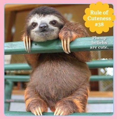 Plump bellehs are cute!