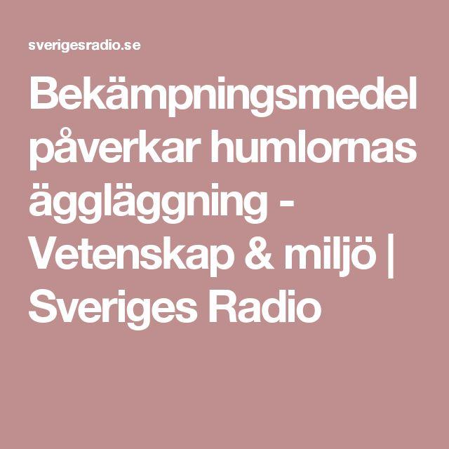 Bekämpningsmedel påverkar humlornas äggläggning - Vetenskap & miljö | Sveriges Radio