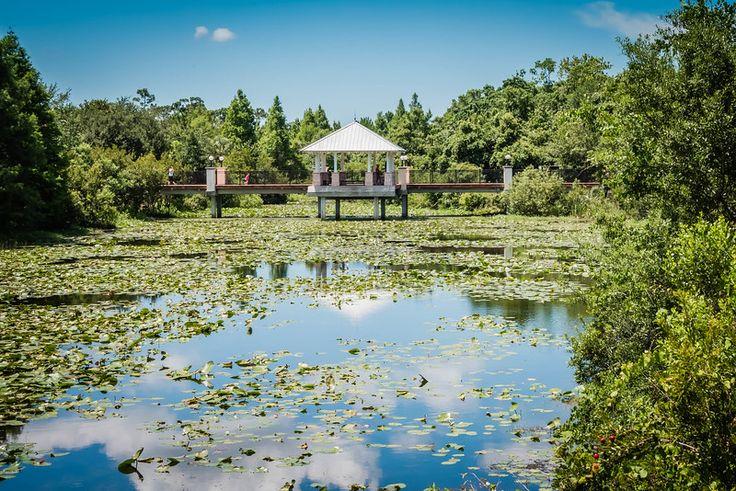 Florida Botanical Garden Cyndy McAtee Photography