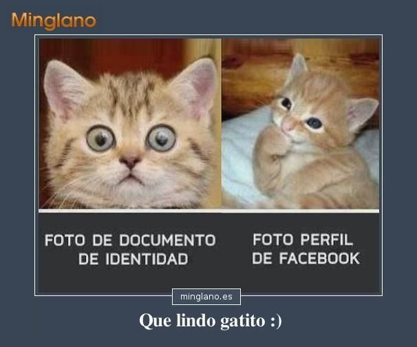 Frase con imágenes de gatos graciosillas que nos muestra las diferencias entre las fotos oficiales y las de las redes sociales