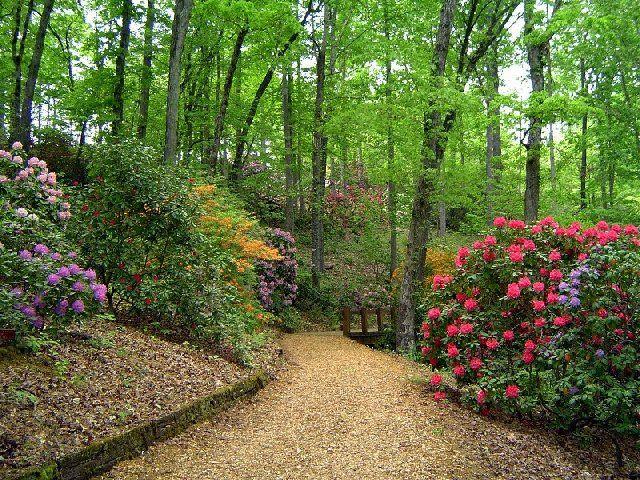 Rhododendron Gardens, Hiawassee, GA