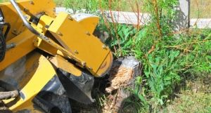 Are You Looking for Affordable Stump Grinding Service Alpharetta
