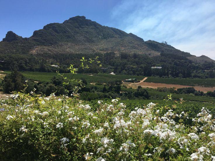 Constantia Glen wine estate, Cape Town