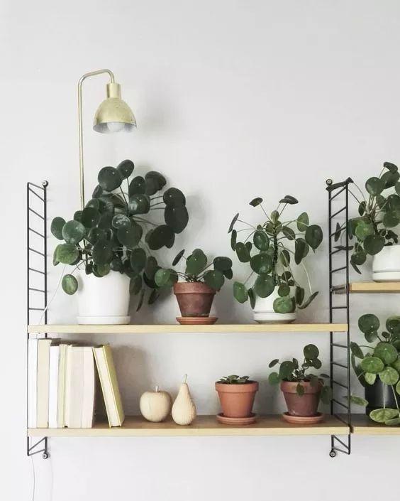Dans la décoration scandinave la plante grasse verte succulente a une place d'honneur . Le pilea peperomioides aussi appelé Chinese money plant envahit l'étagère String furniture.