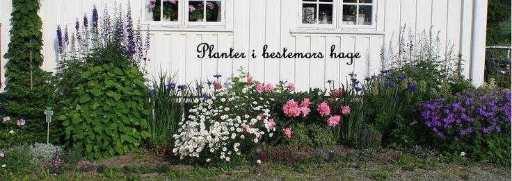 Planter i bestemors hage