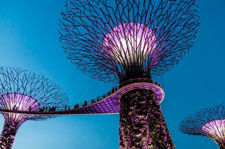 Singapur Sehenswürdigkeiten: Die 10 schönsten Highlights & Reisetipps