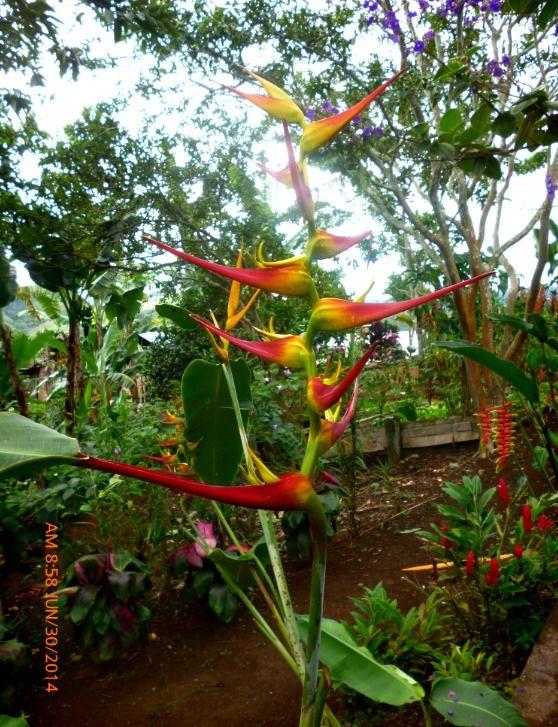 Flores de Puente Palo