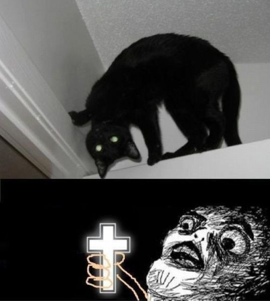 Laugh, Funny Pictures, Bad Cat, Exorcist Cat, Funny Stuff, Demons Cat, Kitty, Black Cat, Animal
