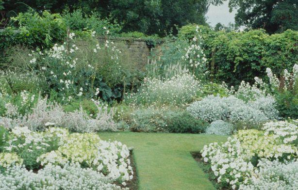 Google Image Result for http://www.webphotos.com.au/photos/barrington_manor_white_garden_gertrude_jeckyl.jpg?thumb=true