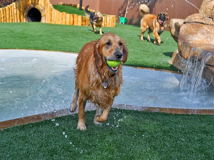 K9Grass by ForeverLawn is the ideal artificial grass for dogs. Maximize your investment with our proven installations. Contact us for an expert consultation.