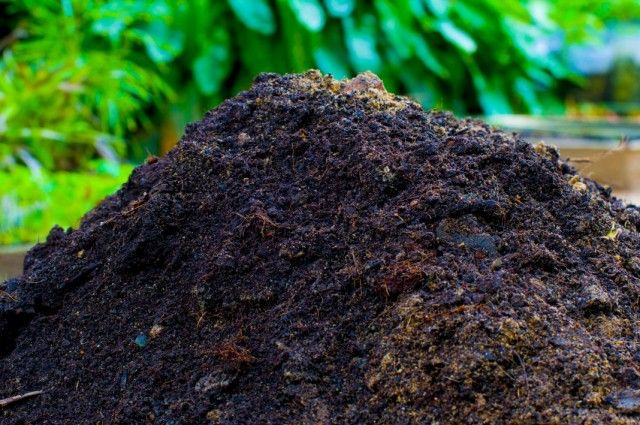 Compost from rotted manure