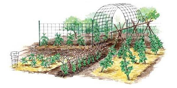 You can improve yield, grow bigger vegetables, and make more effecient use of growing space through vertical gardening.