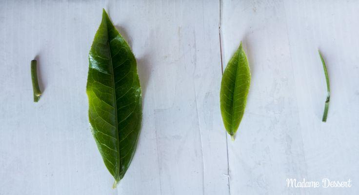 Alles über Anbau, Herstellung und Zubereitung von Schwarzem Ceylon #Tee aus Sri Lanka | Madame Dessert  #srilanka #ceylontea #tea #ceylon