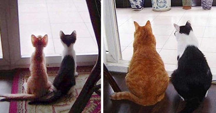 15 πριν και μετά από γατάκια που μεγάλωσαν και έγιναν γάτες!