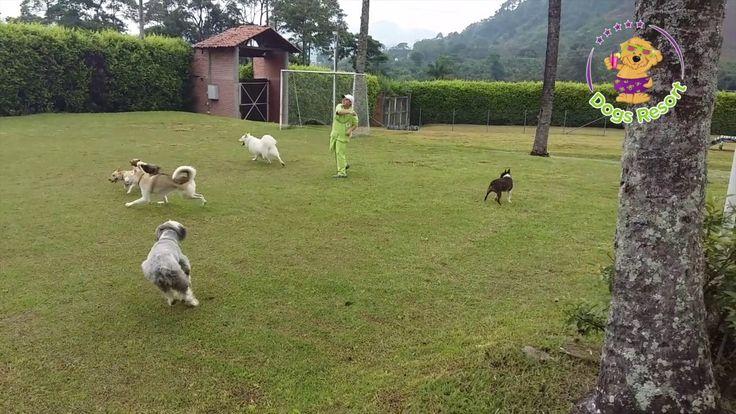 Así nos divertimos en Dogs Resort